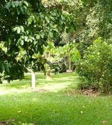 Kingfisher Park Birdwatchers Lodge - Accommodation Brisbane