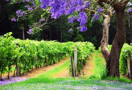 Bago Vineyards - Accommodation Brisbane