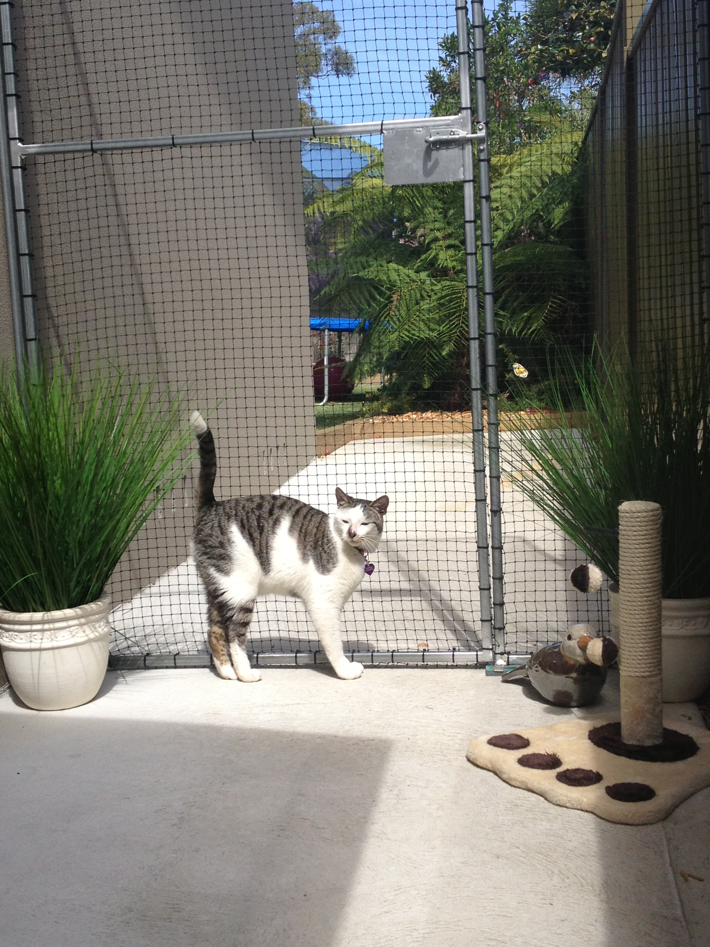 Caringbah Cat Hotel - Accommodation Brisbane