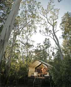 Paperbark Camp - Accommodation Brisbane