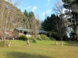 Cedar Lodge Cabins - Accommodation Brisbane