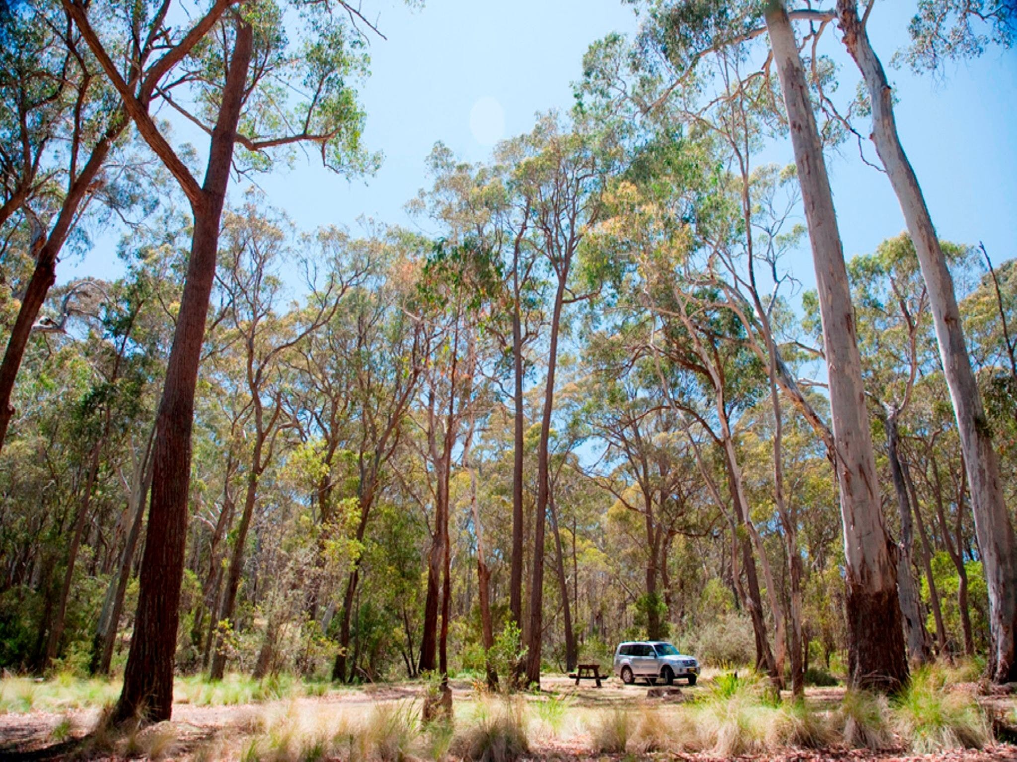Coolah Tops National Park Camping - Accommodation Brisbane