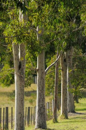 Stringybark Cottages - Accommodation Brisbane