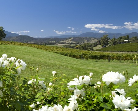 Balgownie Estate Vineyard Resort and Spa - Accommodation Brisbane