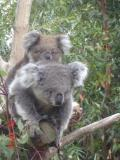 Jirrahlinga Koala & Wildlife Sanctuary - Accommodation Brisbane