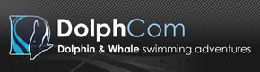 Dolphcom - Dolphin  Whale Swimming Adventures - Accommodation Brisbane