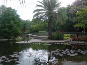 Brisbane City Botanic Gardens - Accommodation Brisbane