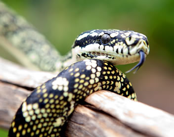 Reptile Encounters - Accommodation Brisbane