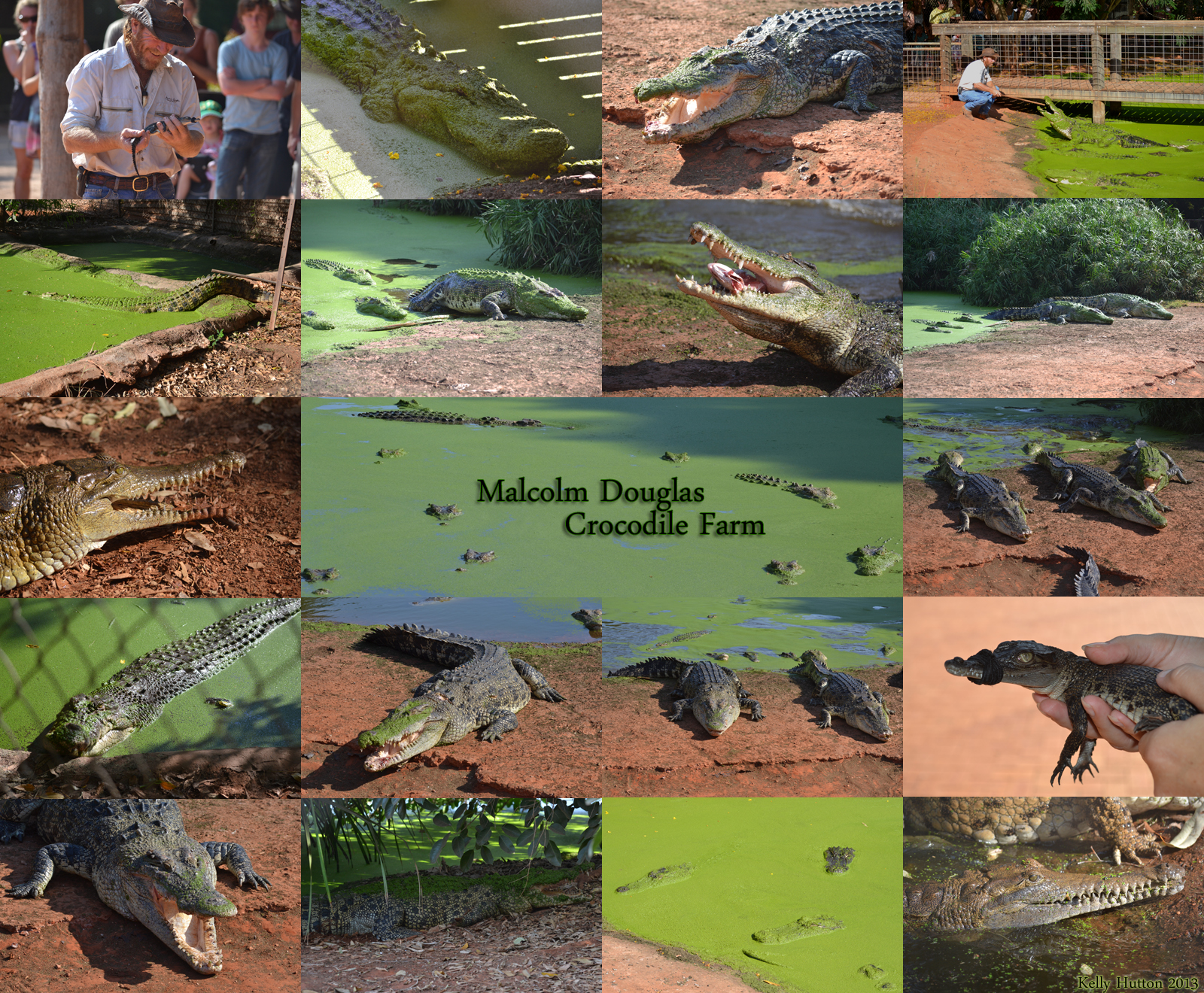 The Malcolm Douglas Crocodile Park - Accommodation Brisbane