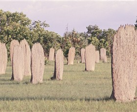 Magnetic Termite Mounds