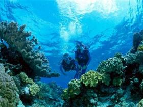 Coral Gardens Dive Site - Accommodation Brisbane
