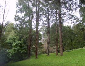 Mount Dandenong Arboretum - Accommodation Brisbane