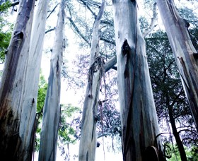 Dandenong Ranges National Park - Accommodation Brisbane