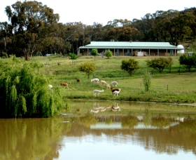 Clearview Alpacas - Accommodation Brisbane