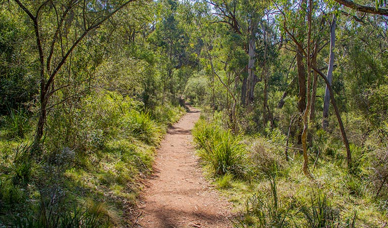 Mares Forest Creek walking track - Accommodation Brisbane