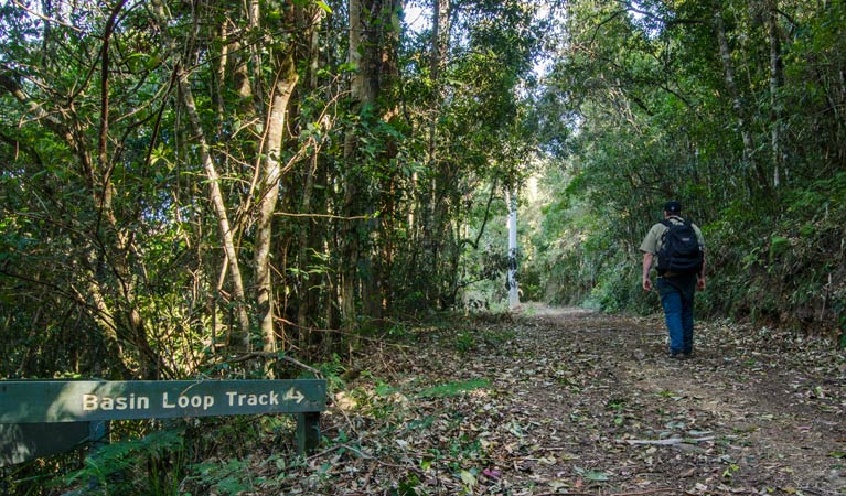 Basin Loop track - Accommodation Brisbane