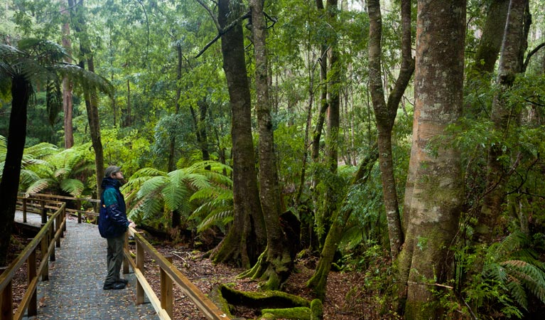 Monga National Park - Accommodation Brisbane