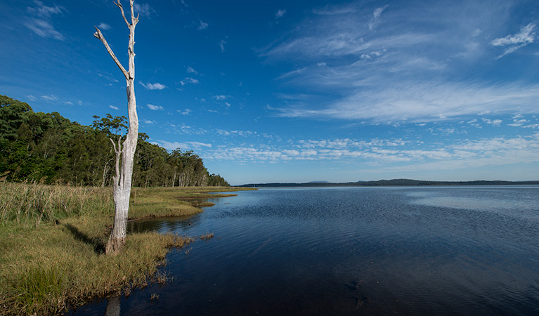 Lake Innes Nature Reserve - Accommodation Brisbane