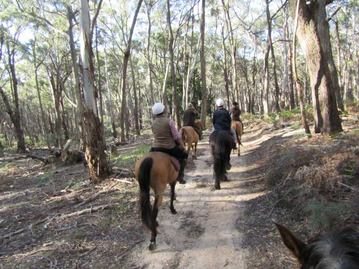 Silver Brumby Trails