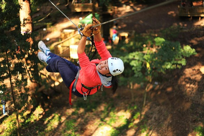 Trees Adventure Lane Poole Park - Treetop  Zipline Experience - Accommodation Brisbane