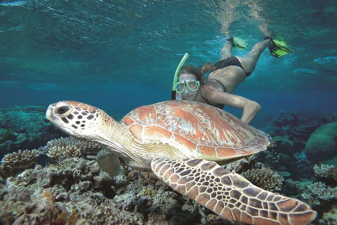Great Barrier Reef Sailing and Snorkeling Cruise from Port Douglas - Accommodation Brisbane