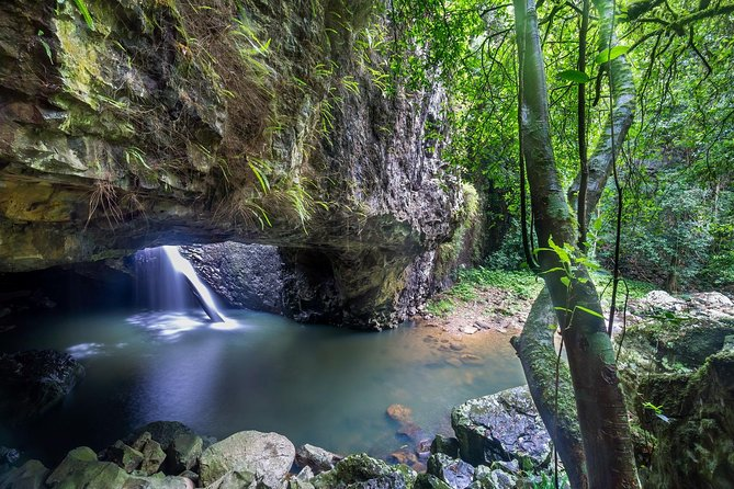 Springbrook and Tamborine Rainforest Tour Including Natural Bridge and Glow Worm Cave - Accommodation Brisbane