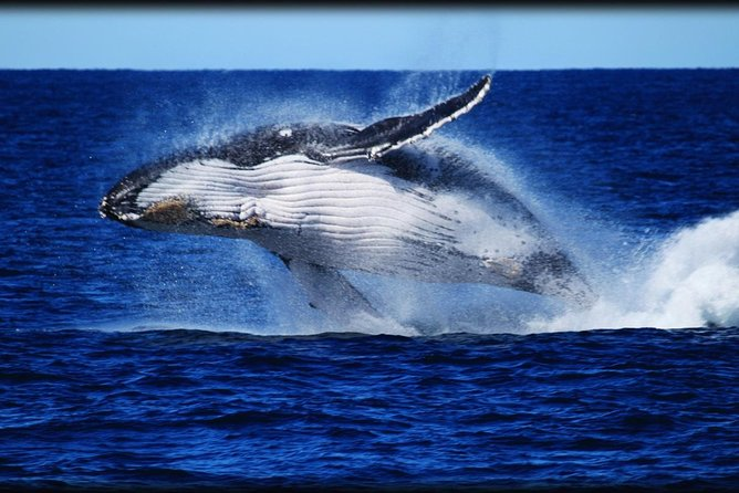 Whale Watching Cruise from Redcliffe Brisbane or the Sunshine Coast - Accommodation Brisbane