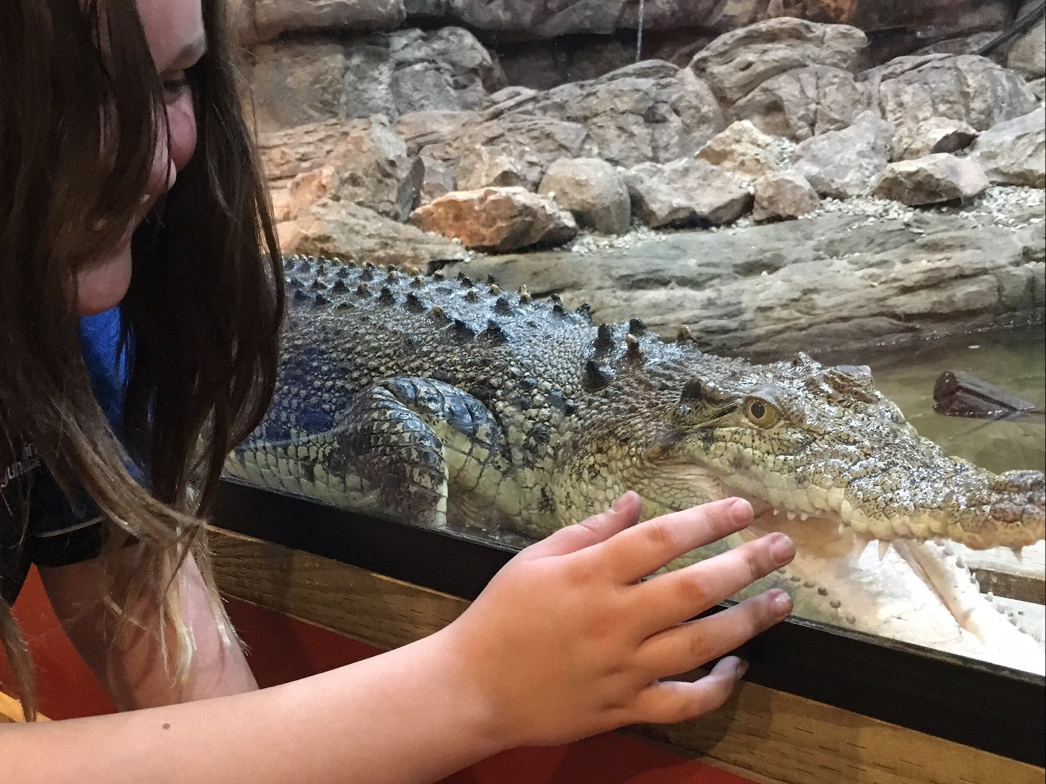 Canberra Reptile Zoo - Accommodation Brisbane