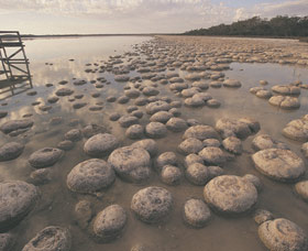 Lake Clifton Thrombolites - Accommodation Brisbane
