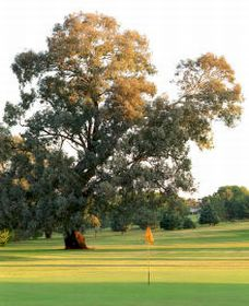 Cowra Golf Club - Accommodation Brisbane