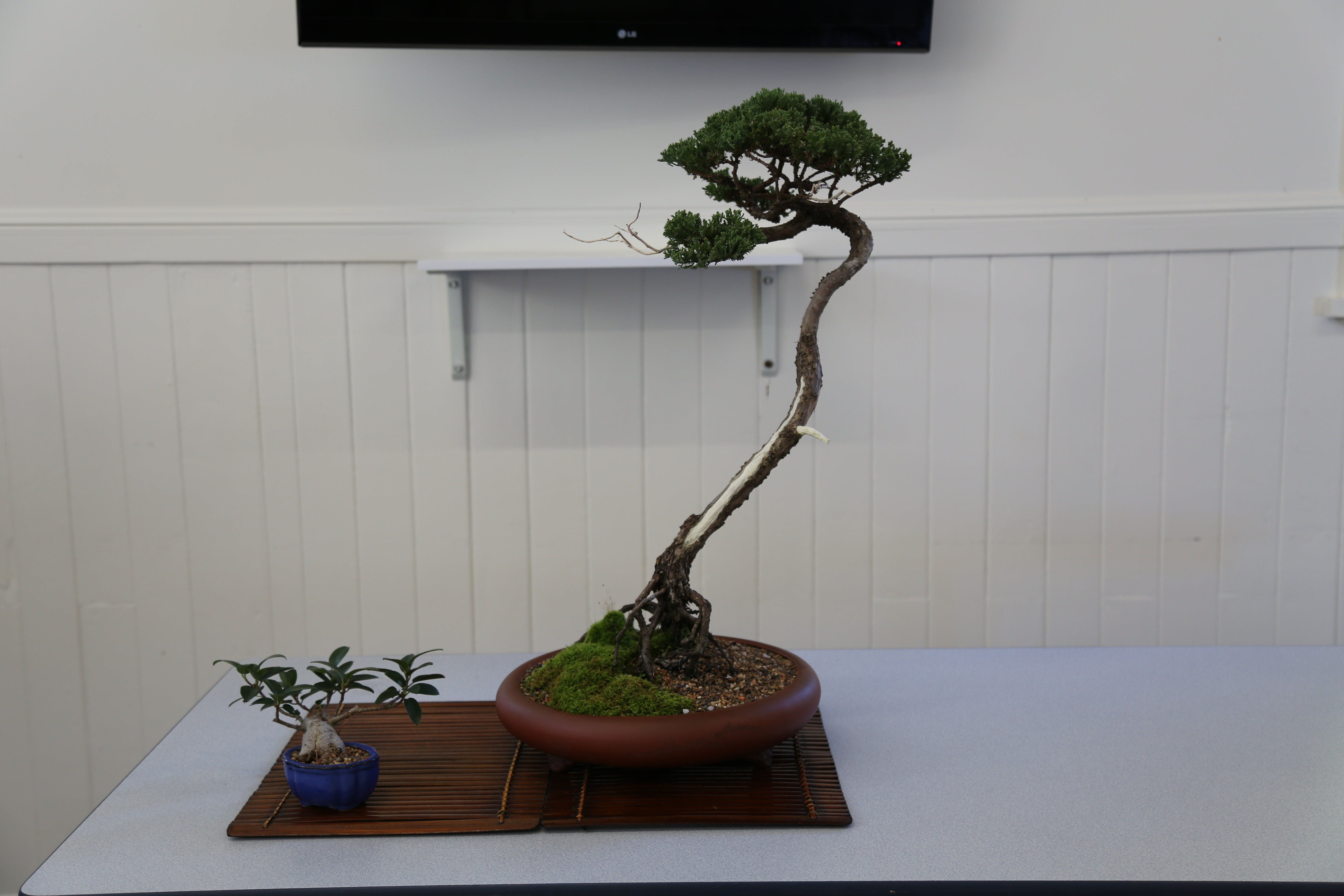 Wauchope Bonsai Workshop Group - Accommodation Brisbane