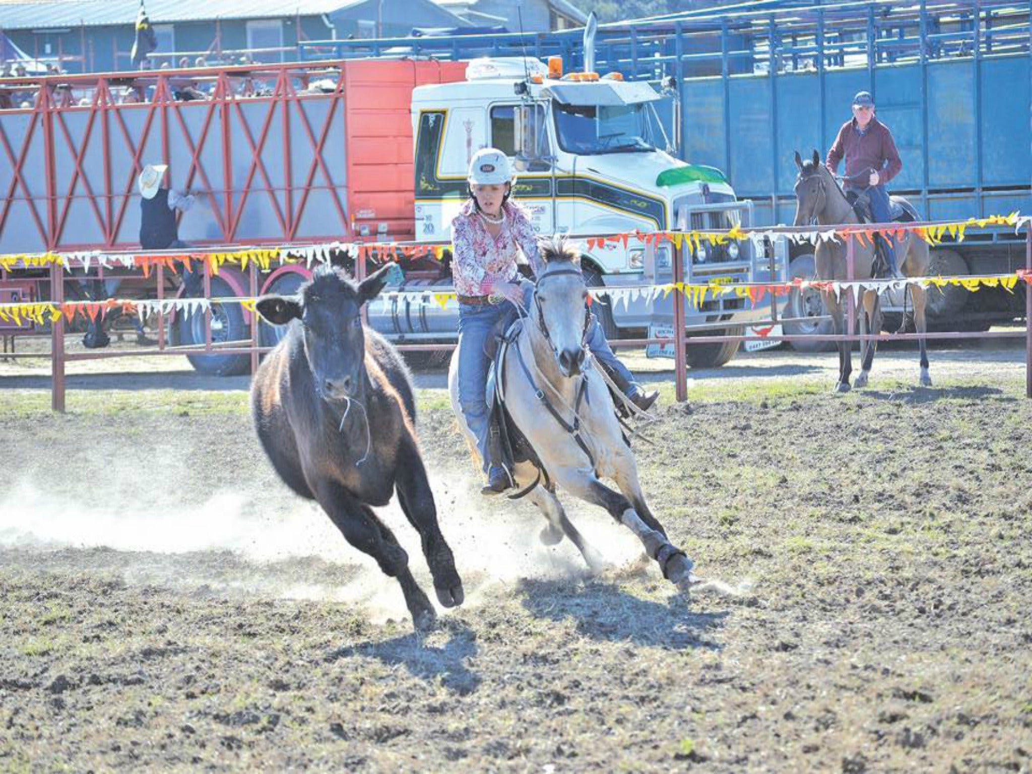 Gresford  Campdraft and Rodeo - Accommodation Brisbane