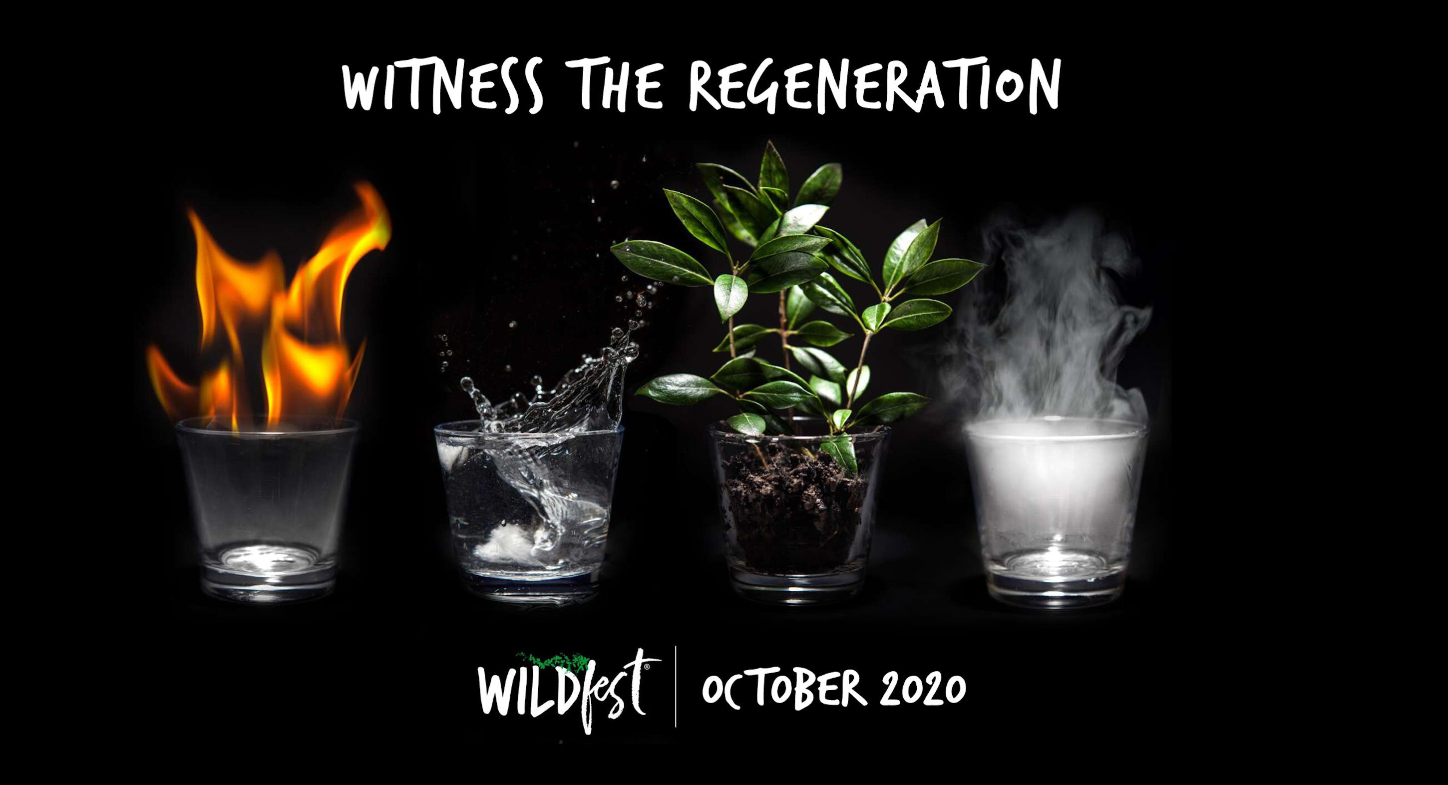Wildfest - Annual Festival - Accommodation Brisbane