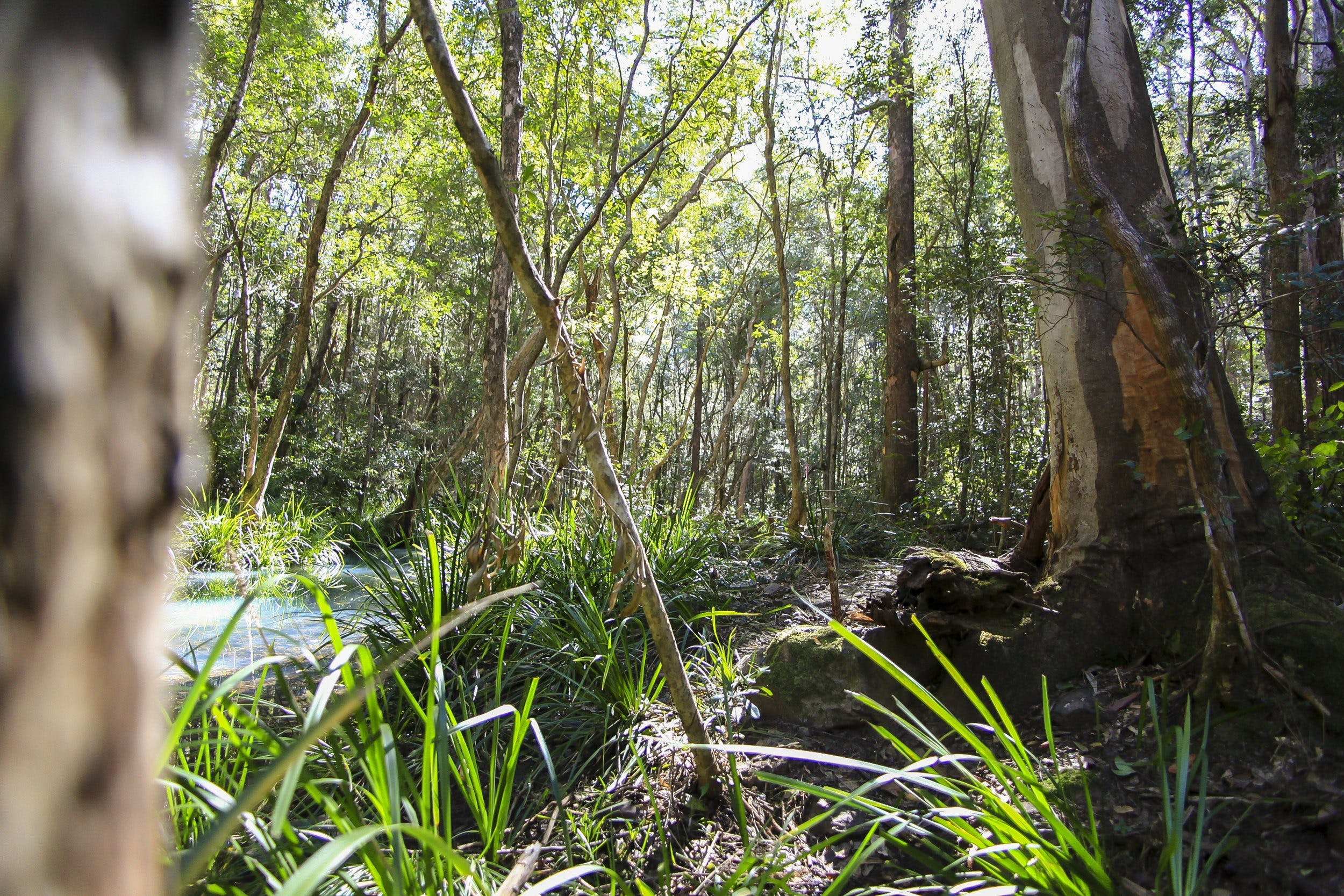 Bottlebutt Bash Trail Run - Accommodation Brisbane