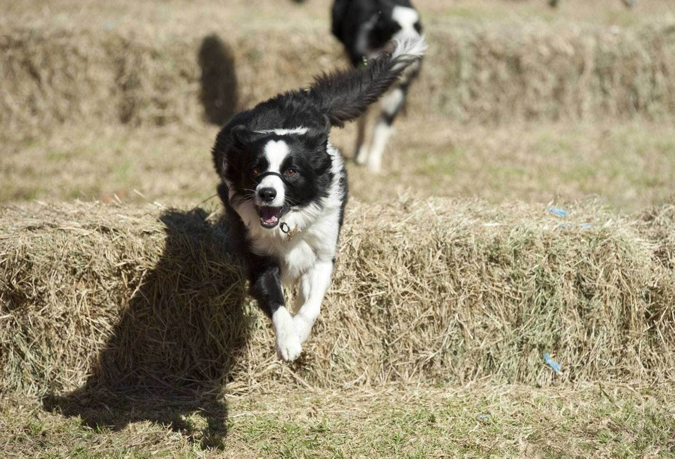 Great Nundle Dog Race - Accommodation Brisbane