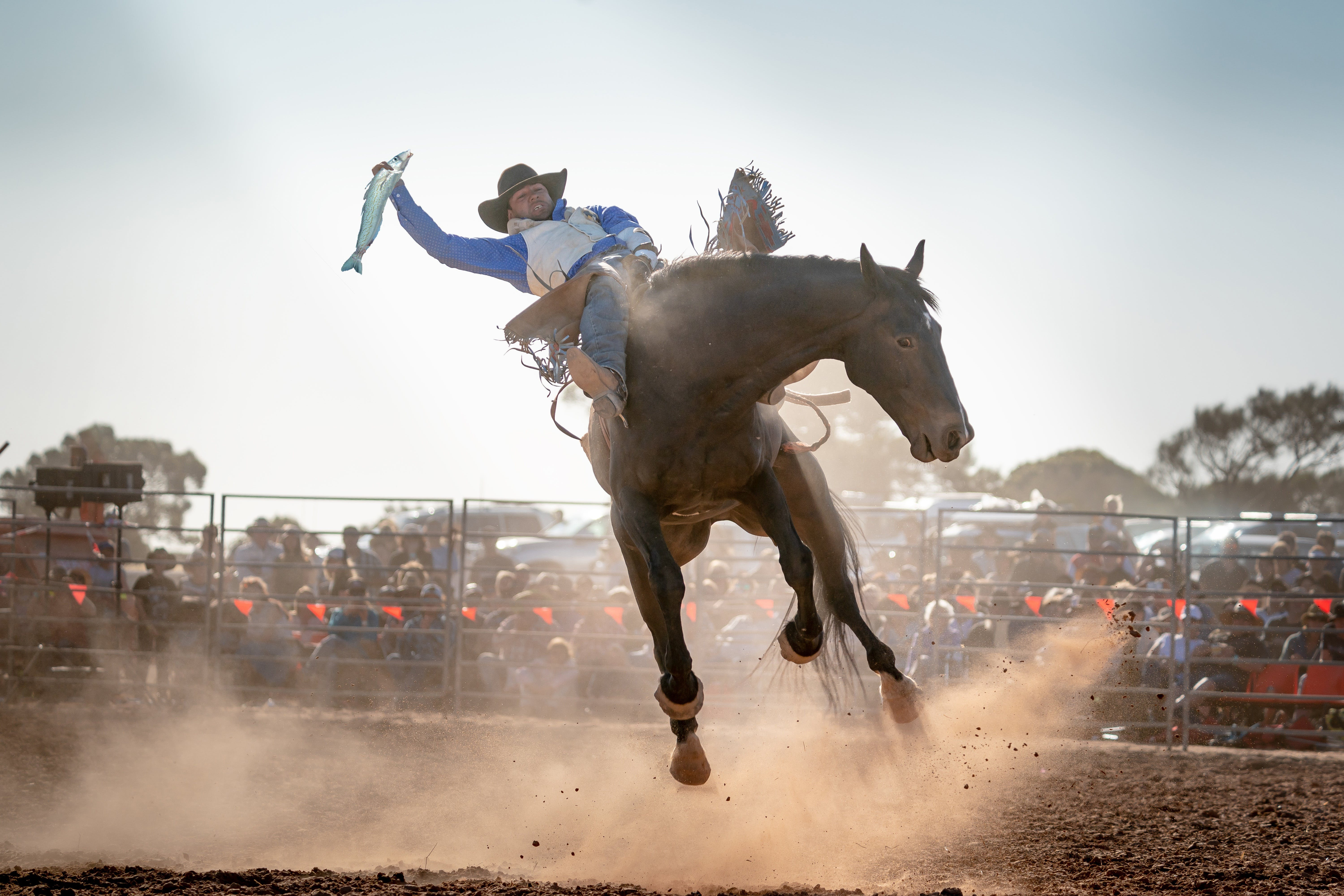 Rodeo by the Sea - Streaky Bay - Accommodation Brisbane